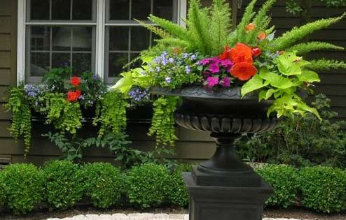 Shade containers so easy to do: creeping jenny, begonia, fern, lime sweet