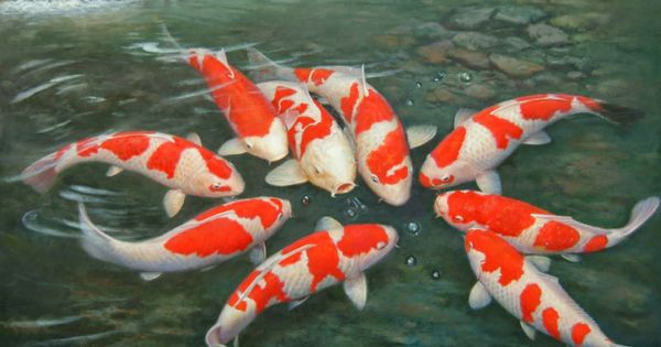 Most beautiful koi fish most beautiful koi fish images for Expensive koi carp for sale