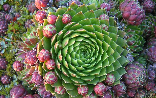 types of succulents | Secrets of Growing Cacti and succulents, Cactus Plants
