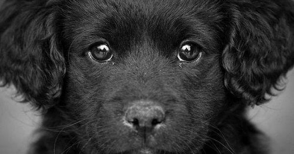 puppy dog eyes *