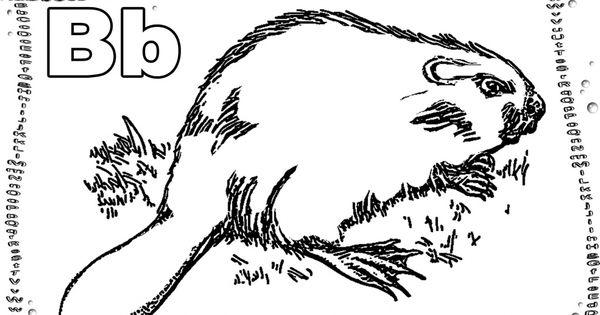 abc buchstaben tiere  realistische malvorlagen zum