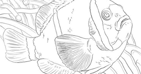 Aneka Gambar Mewarnai Gambar Mewarnai Ikan Di Laut Untuk Anak