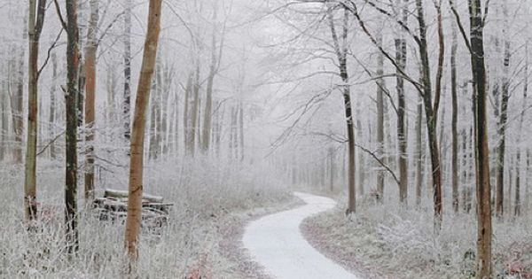 The path to a winter wonderland