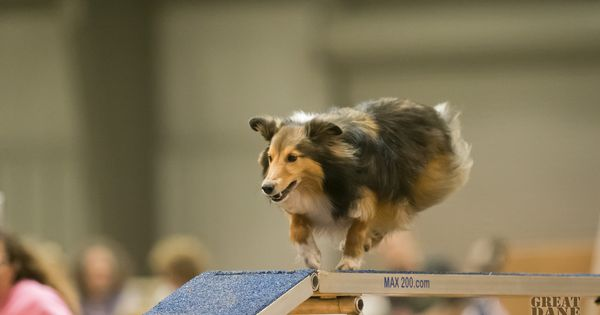 Can The Disabled Handler Be Competitive In Dog Agility With