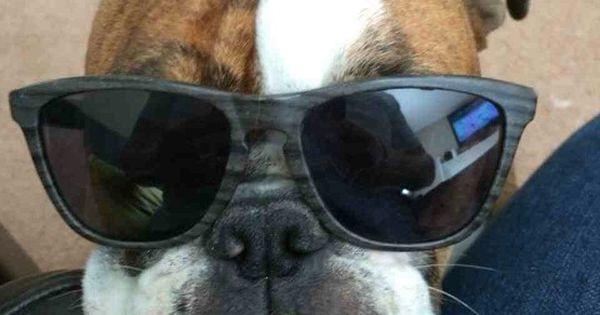 Dog - good photo
