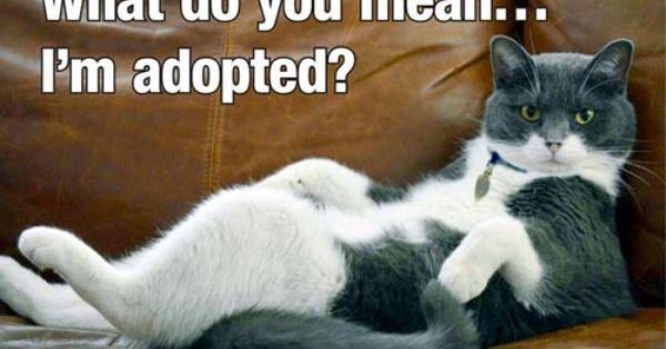 Dumb Friends League Breaks Ground Cat Pavilion Dumb Friends League Kittens Funny Cats