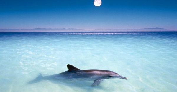 A dolphin swimming in shallow water Water & Beach