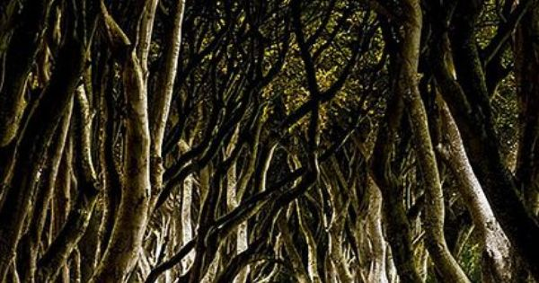 Dark Hedges, Northern Ireland. Beautiful