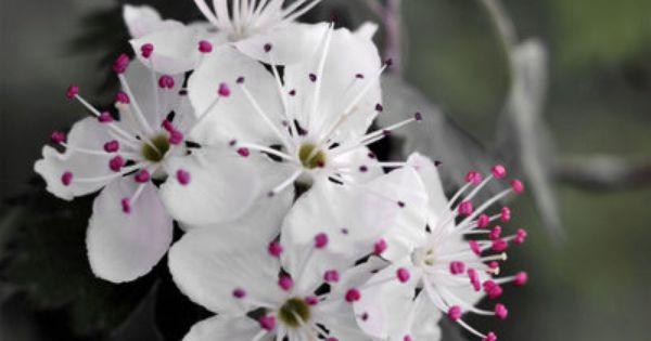 The Flowering Tree By Sara Satellite On Deviantart Flowering Trees Pretty Flowers Amazing Flowers