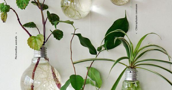 ampoules lectriques remplies d eau avec des plantes dedans qui ont les racines qui poussent. Black Bedroom Furniture Sets. Home Design Ideas