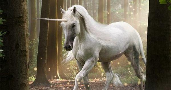 Legend Movie Unicorn Unicorn Legend Mythical Beasts