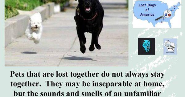Pinterest u2022 Maailman kätevin ideakuvasto - lost dog flyer template