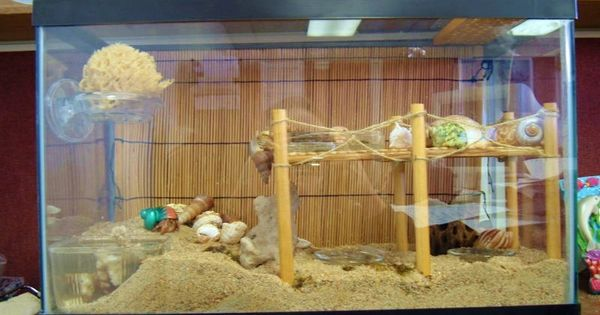 DIY Hermit Crab Boardwalk Brooke Williams Smith this is the only way