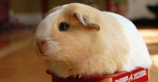 so funny little hamster