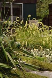Pin By Catherine Devaliant On Garden Native Garden Native Plant Gardening Garden Landscape Design