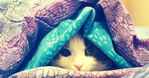 Esse Dies Zum Fruhstuck Und Du Brauchst Dir Keine Sorgen Mehr Uber Bauchfett Zu Machen Katzen Bauchfett Bauch Weg