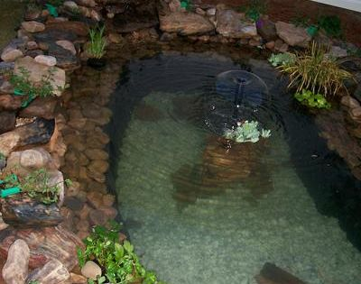I like the shallow rock shelf on this pond fish pond for Shallow koi pond