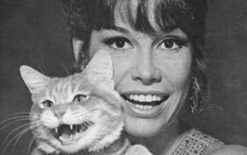 mary tyler moore + cat   the hairy eyeball   Pinterest ...