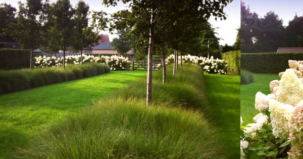 Nice combination white hydrangea paniculata grasses birch trees by deteldertuinen garden - Eigentijdse landscaping ...