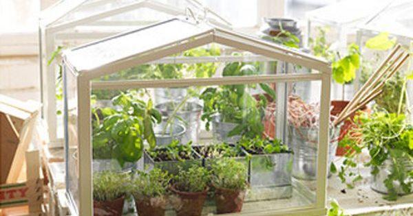 un terrarium pour verdurer son habitat autrement mini serre les minis et serre. Black Bedroom Furniture Sets. Home Design Ideas