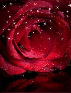 خلفيات ورود متحركة للموبايل اجمل الخلفيات المتحركة للجوال مجموعة صور ورود متحركة Flower Phone Wallpaper Red Roses Flowers