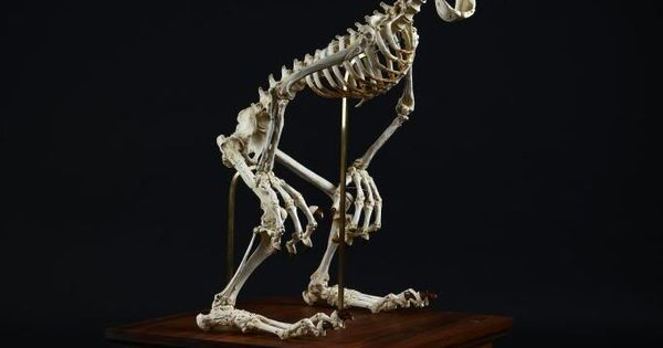 Creepily Realistic Skeleton Sculptures Of Well-Known Cartoon Characters - Disney's Goofy!
