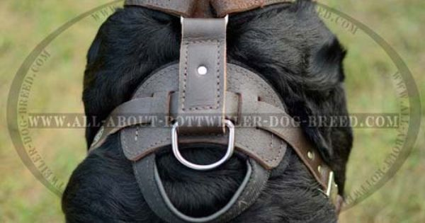 Classic Leather Rottweiler Harness For Attack Training And