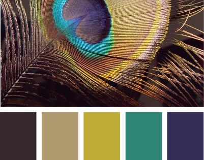 peacock hues ~ color inspiration