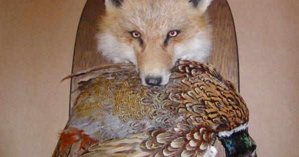 Taxidermy Fox Pheasant Wall Mount Taxidermy Fox Animal Hunting Taxidermy