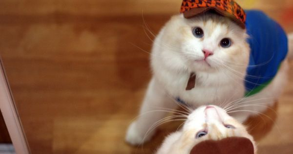 Cat Wearing Hat Pet Costumes