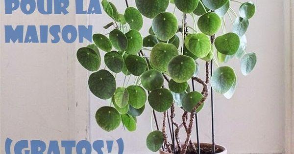 diy 10 jolies plantes pour la maison ananas avocat citron lavande fruit de la passion. Black Bedroom Furniture Sets. Home Design Ideas