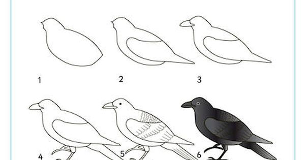 Learn To Draw A Raven Bird Drawings Crows Drawing Drawings