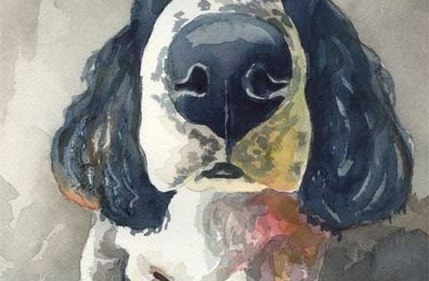 Springer Spaniel Art Print of Original Watercolor by dogartstudio