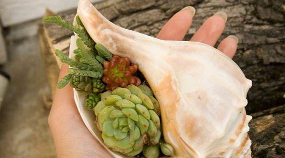 Reserved: DIY Succulent Mini Garden Seashells, Sea Shell Terrarium, Succulent Plants, Custom