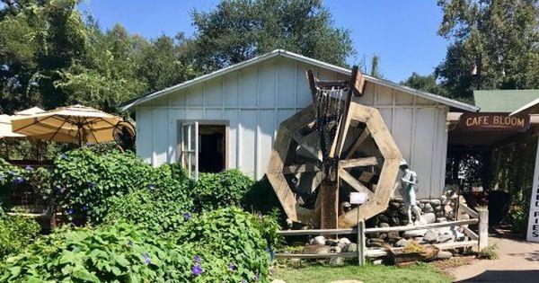 fc462dce7d8fd24acea105c61c54f3dc - Myrtle Creek Botanical Gardens & Nursery Fallbrook Ca