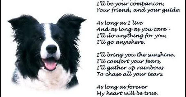 I Have 2 Border Collies Bc Mix Such A Blessings To Have Very