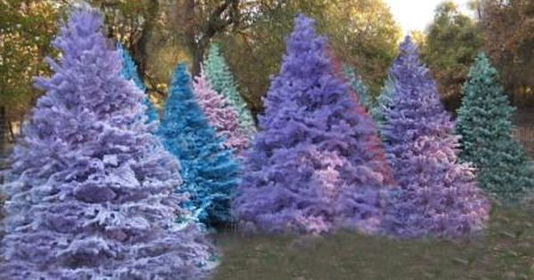 flocked purple christmas trees!!!! Love :-)
