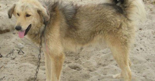 Inventory List Dog Breeds Dogs Pet Birds