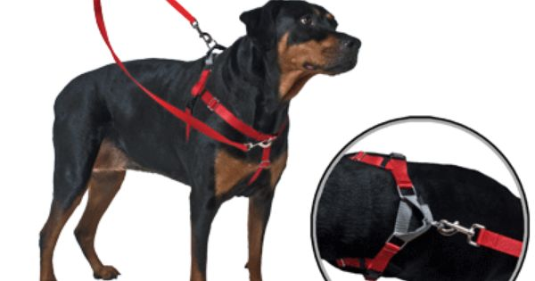 Double Ended Leash For The Freedom Harness Highly Recommended