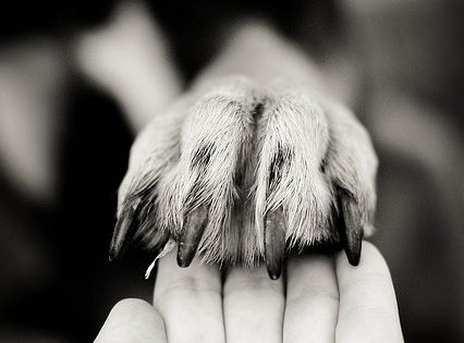 by placing my paw in your hands..I am also placing my life
