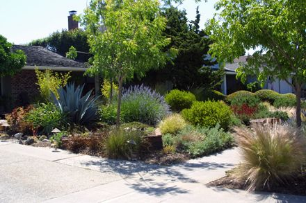 Sustainable Low Water Garden Design In San Jose California Low Water Landscaping California Native Garden Garden Landscape Design
