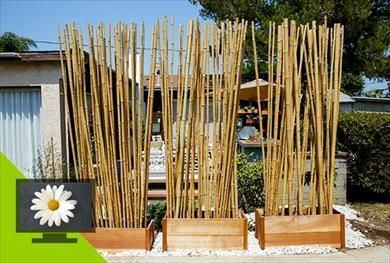 This Project Makes A Three Section Privacy Screen Using Bamboo Sticks For More Diy Projects From Home Mad Bamboo Privacy Bamboo Landscape Summer Outdoor Decor
