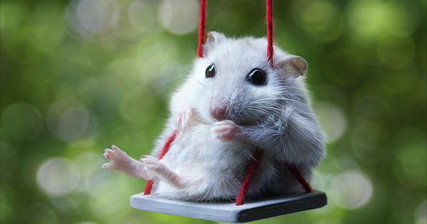 so cute! mouse on a swing :)