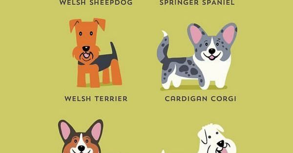 Dogs Of The World Infographic Dogs Of The World Dog Breeds