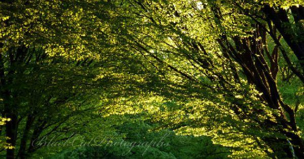 spring green three trees - photo #32