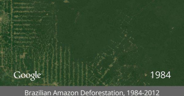 Animated Gif Of Brazilian Rainforest Deforestation Amazon