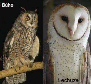 Buho Y Lechuza Animales Lechuzas Stuffed Animals