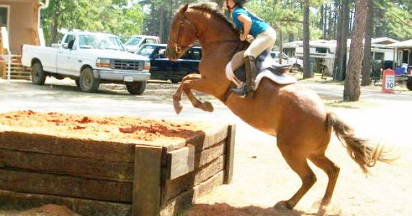 Equestrian Center Offers Outlet For Horse Lovers Horse