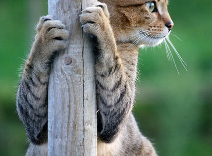 After the mouse catching gig fell through, Kiki turned to pole dancing...