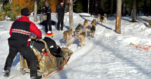 Schlittenhunde Tour In Lappland Travel On Toast Schlittenhunde Hundeschlitten Lappland